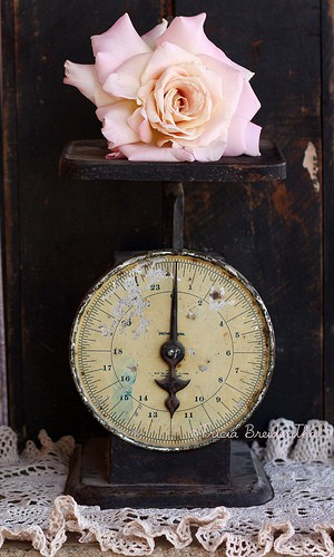 Vintage-pink rose + black vintage scale= ♥